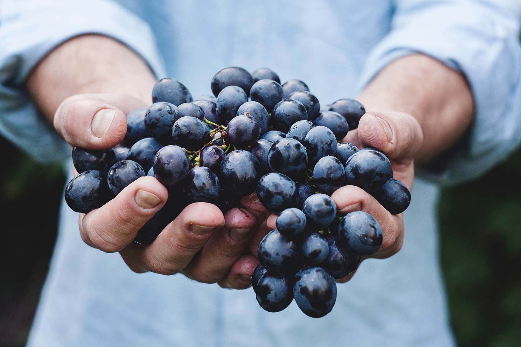 Black Grapes Skin & Hair Benefits