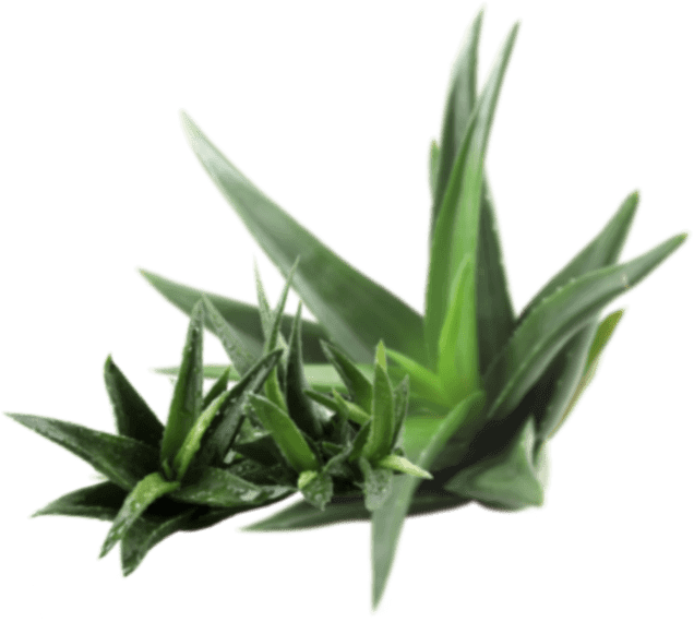 cosmetics-aloe-layer-2